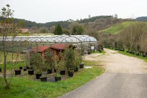 Plantas forestales autóctonas Camargo