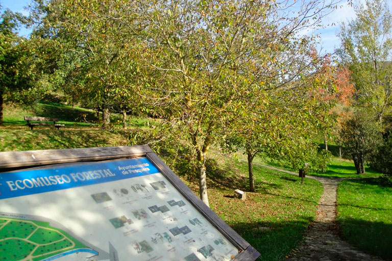 Ecomuseo forestal  Pesquera